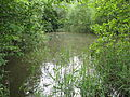 Haverforths Wiesen (ST-031) Teich 03.jpg