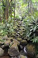 Hawaii Tropical Botanical Garden - panoramio (2).jpg