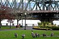 Hawthorne Bridge - panoramio.jpg
