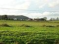 Hazliebrae Farm - geograph.org.uk - 289469.jpg