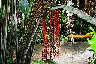 World Botanical Gardens - World Botanical Gardens