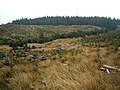 Hillside in Loch Ard Forest - geograph.org.uk - 1295240.jpg
