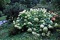 Hillwood Gardens in July (19775810256).jpg