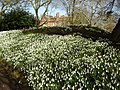 Hodsock Priory over a bank of Snowdrops - geograph.org.uk - 1038388.jpg
