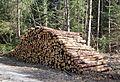 Hoehenkirchner Forst Grasbrunn-9.jpg