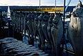 Homer, Alaska (50043436622).jpg