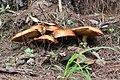 Hongos en bosque húmedo.jpg