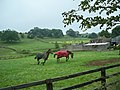 Horse Country at Middleham - geograph.org.uk - 1375715.jpg