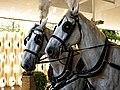 Horse drawn hearse horses City of London Cemetery 1 lighter.jpg