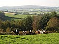 Horses on Rora Down - geograph.org.uk - 1012838.jpg