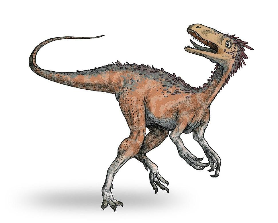 Huaxiagnathus-v2