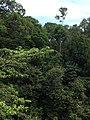 Hutan Alam Mandi Angin Minas Riau 10.jpg