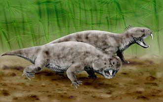 Rhynchosaur - life restoration of Hyperodapedon
