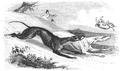 Illustrirte Zeitung (1843) 09 141 2 Ein Hundewettrennen.PNG