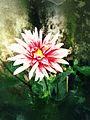Image of a beautiful flower.jpg