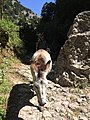Imbros Gorge June 2 2015 2.JPG