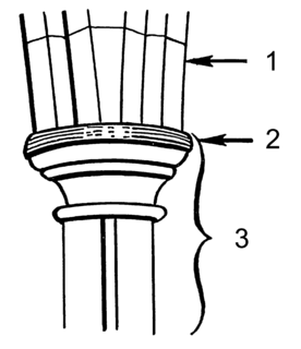 Impost (architecture) in architecture, a projecting block resting on top of a column or embedded in a wall
