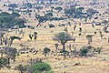 Impressions of Serengeti (112).jpg