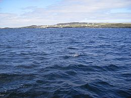 Inishbofin, Galway, Ireland. Lighthouse from sea (SE).JPG