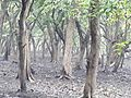 Inside the jungle of Pobitora Wildlife Sanctuary, Assam 02.jpg