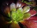 "Iran-qom-Cactus-The greenhouse of the thorn world گلخانه کاکتوس ""دنیای خار"" در روستای مبارک آباد قم- ایران 36.jpg"