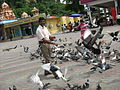 Irvin calicut feeding pigeons in batu caves in malaysia 0 (1).JPG