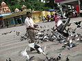 Irvin calicut feeding pigeons in batu caves in malaysia 0 (1).JPG