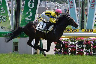 Isla Bonita Japanese-bred Thoroughbred racehorse