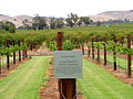 Jacob's Creek. Cabernet Sauvignon. Barossa Valley SA.jpg
