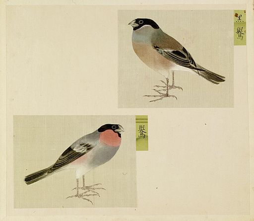 Japanese - Leaf from Album Depicting Small Birds - Walters 3517212