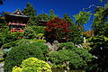 Japanese Garden Golden Gate Park.JPG