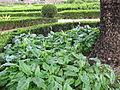 Jardim Botanico da Ajuda (14005564832).jpg