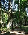 John Luby Park trees - Portland, Oregon.JPG