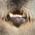 Kalan's mouth.jpg