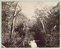 Kangaroo Creek (fresh water), (New South Wales). (6173941394).jpg