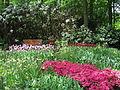 Keukenhof Garden (3).JPG