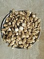 Khumbhi (local name for mushroom in Tharparkar).jpg