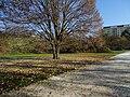 Kobyliská střelnice, strom za vstupem.jpg