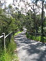 Koonung Creek Trail Blackburn Road.JPG
