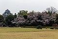 Korakuen garden (26531517580).jpg