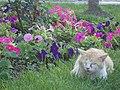 Korkyra-cat - panoramio.jpg
