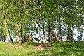 Krievijas karavīru brāļu kapi (4470 kritušie) WWI, Tīnūžu pagasts, Ikšķiles novads, Latvia - panoramio.jpg