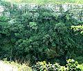 Kuskranswoud, Krantzkloof Natuurreservaat.jpg