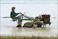 Labourage des rizières dans le delta du fleuve rouge (4375856278).jpg