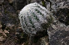 A color picture of a green and cactus with white spines
