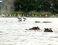 Lake Chama Wildlife.jpg