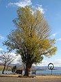 Lake Toya/洞爺湖にて - panoramio.jpg