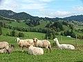 Lama und Schafe - panoramio.jpg