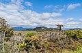 Landscape in Paparoa National Park 03.jpg