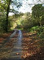Lane at Bottle Hill - geograph.org.uk - 1575575.jpg